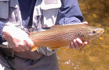 bestbet_trout