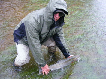 Late winter and spring Steelhead shake off the winter blues and take us into May