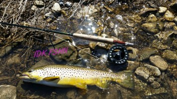 A large early season Grand River brown, courtesy of Scott Tomblin.