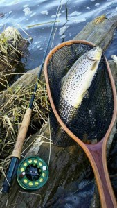 One of our guides, Nick Groves took this fish from the lower sector.