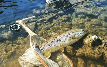 Big Streamer take Big Trout regularly!