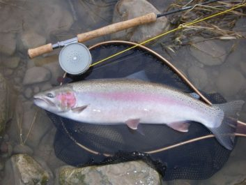 A near perfect example of a Great Lakes Steelhead.